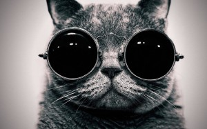 Cat-steampunk-wallpaper-glasses-funny-wallpapers-1920x1080-1280x800